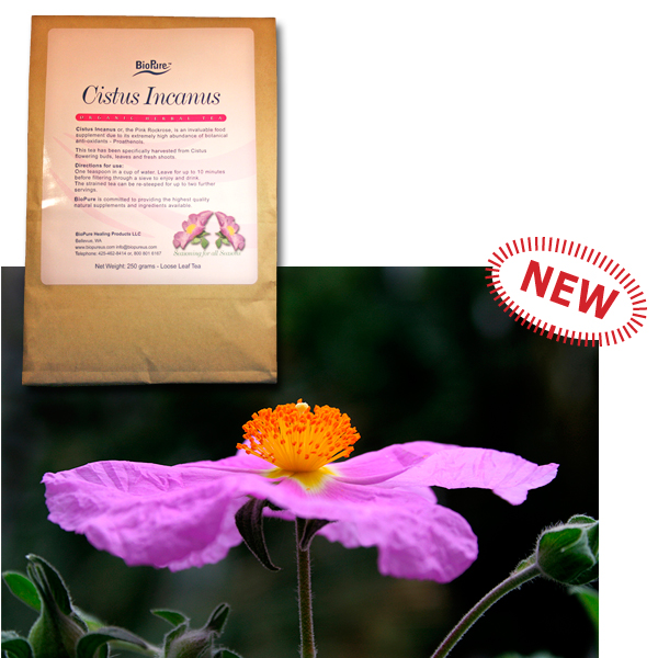 Cistus incanus bag and flower