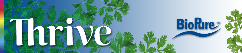 Thrive cilantro banner