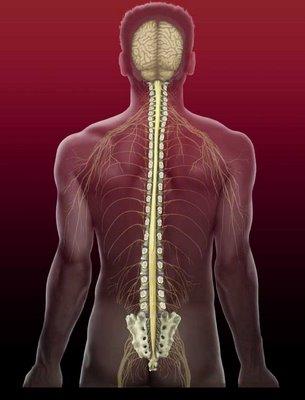 spine 2