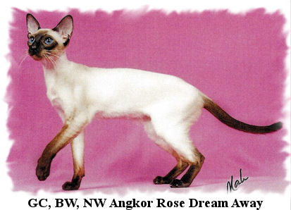 Abyssinian Cat Breeders Pa