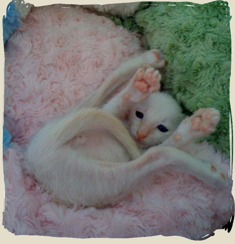 Penny's Kitten