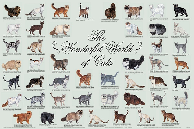 World of Cats Poster