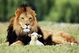 lion _ lamb