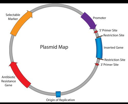Plasmids 101 plasmid map