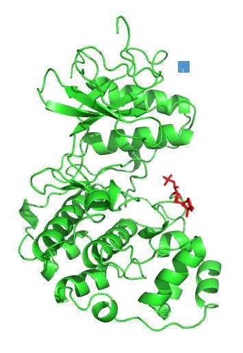ERK2-phosporylated