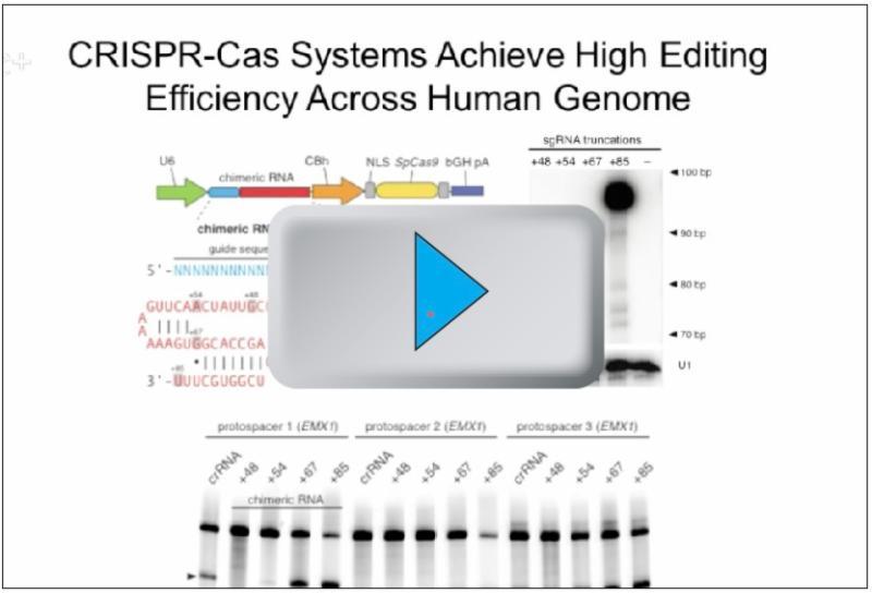 CRISPR-Cas video by Le Cong