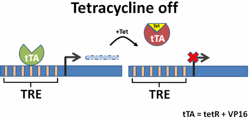 Tetracycline off image