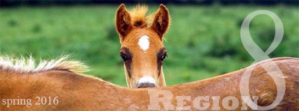 region 8 foal spring