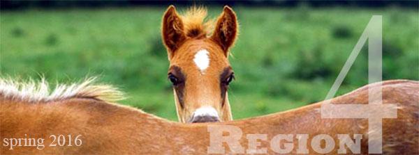 region 4 foal spring