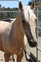 sammy, horse of the month