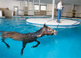 horse swimming in a pool