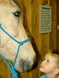 child looking at a horse