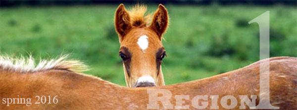region 1 spring foal
