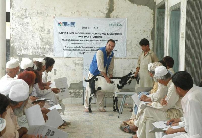 Livestock training