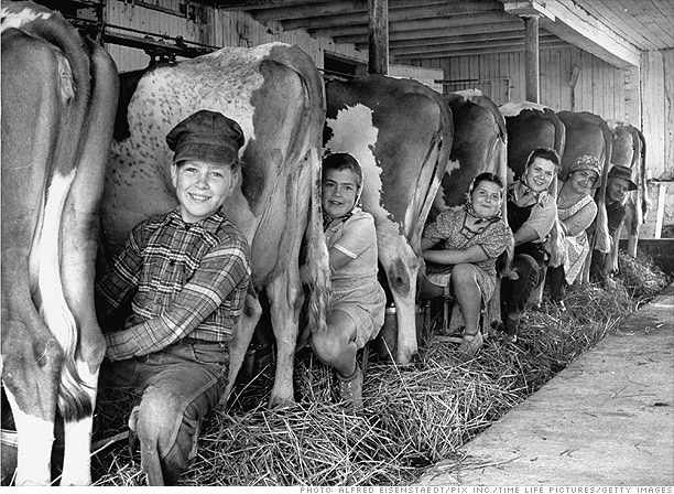 Family milking cows