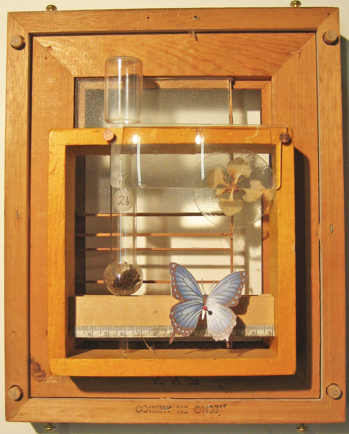 Francisco Hernandez Box Assemblage