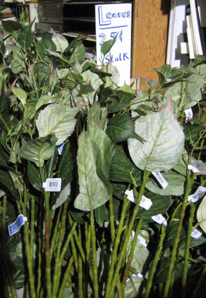 Hydrangea Leaf Stalks