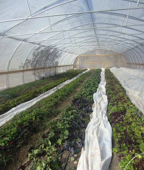 Algo Nativo Greenhouse