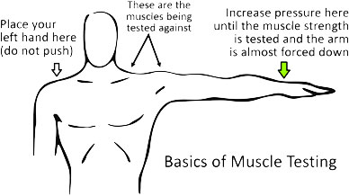 Kinesiology and muscle testing