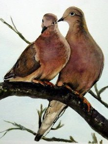 Mourning Doves Courtship