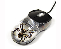 Computer Mouse - Real Insect
