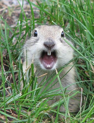 Squirrel Reverse