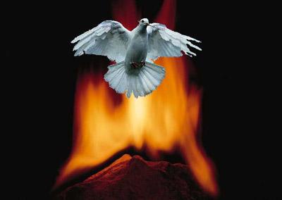 Dove Fire