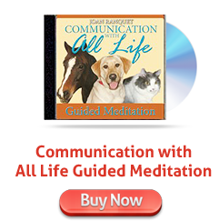 Communication with All Life Guided Meditation