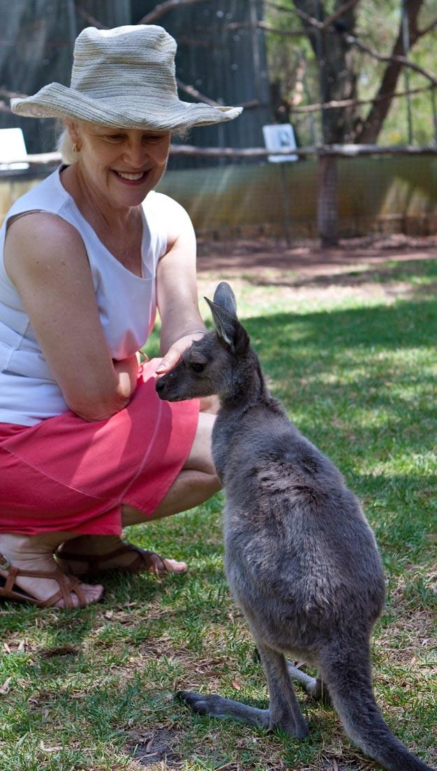 DLR with kangaroo