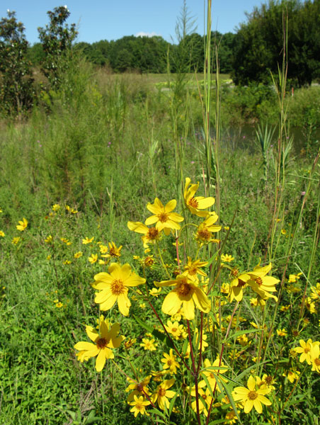 Plants surrounding nursery pond.