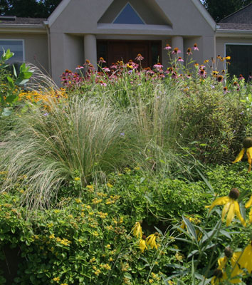 Residential trends favor grasses