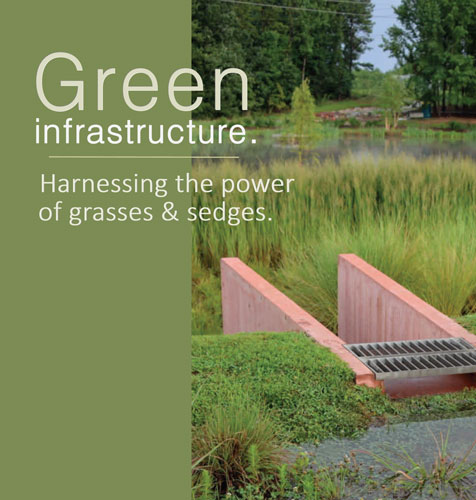 Perennials & Grasses for Green Infrastructure