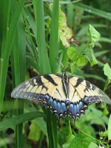 Butterfly with grasses