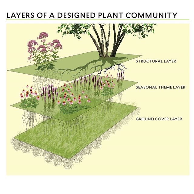 Layers of a designed plant community