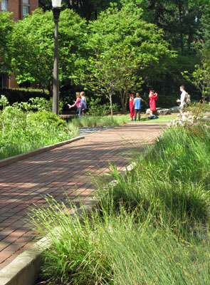 Green infrastructure project at NCSU