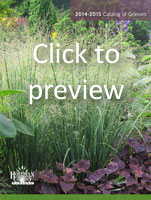 Preview our Catalog of Grasses