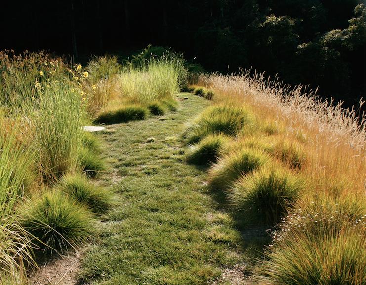 Greenleee Meadow garden