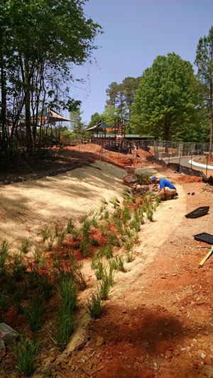 Bioswale at Raleigh park