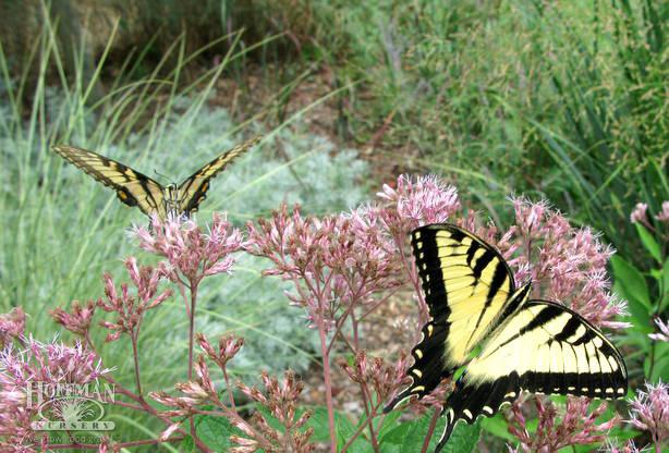 Grasses & Sedges for pollinators