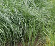 Rain Gardens & Bioretention