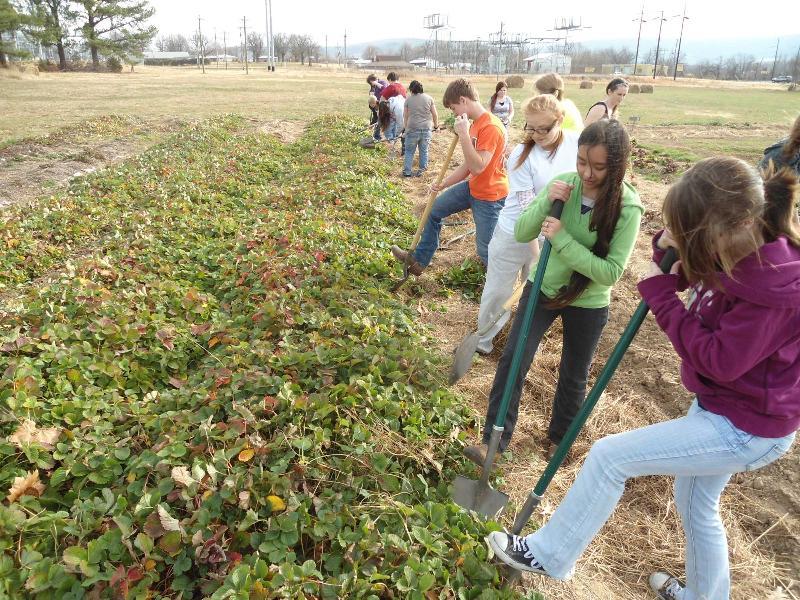Delta Garden Study | Organic Farming Research Foundation