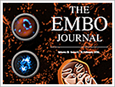 Bioss Antibodies publishes in The EMBO Journal