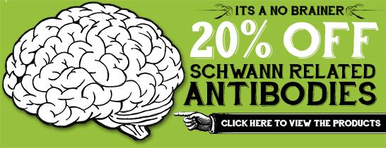 Schwann related antibodies