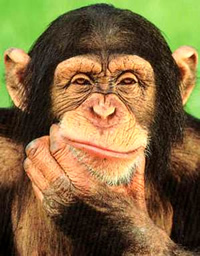The Thinking Chimp...