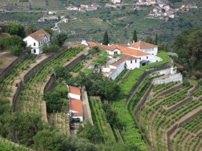 Noval Vineyard