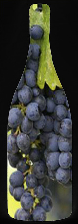Bottle with grapes