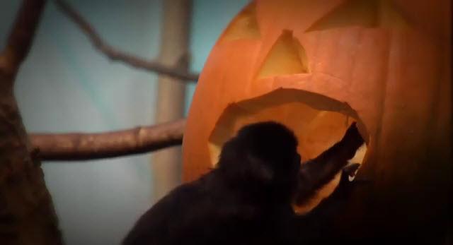 Granby Zoo Halloween