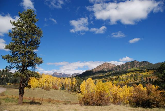 Fall Colors In Pagosa