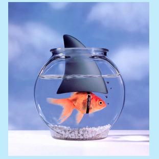 Adapted aquatics