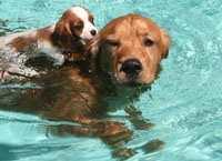 Dog & pup